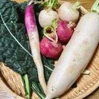 大阪京橋で無農薬野菜
