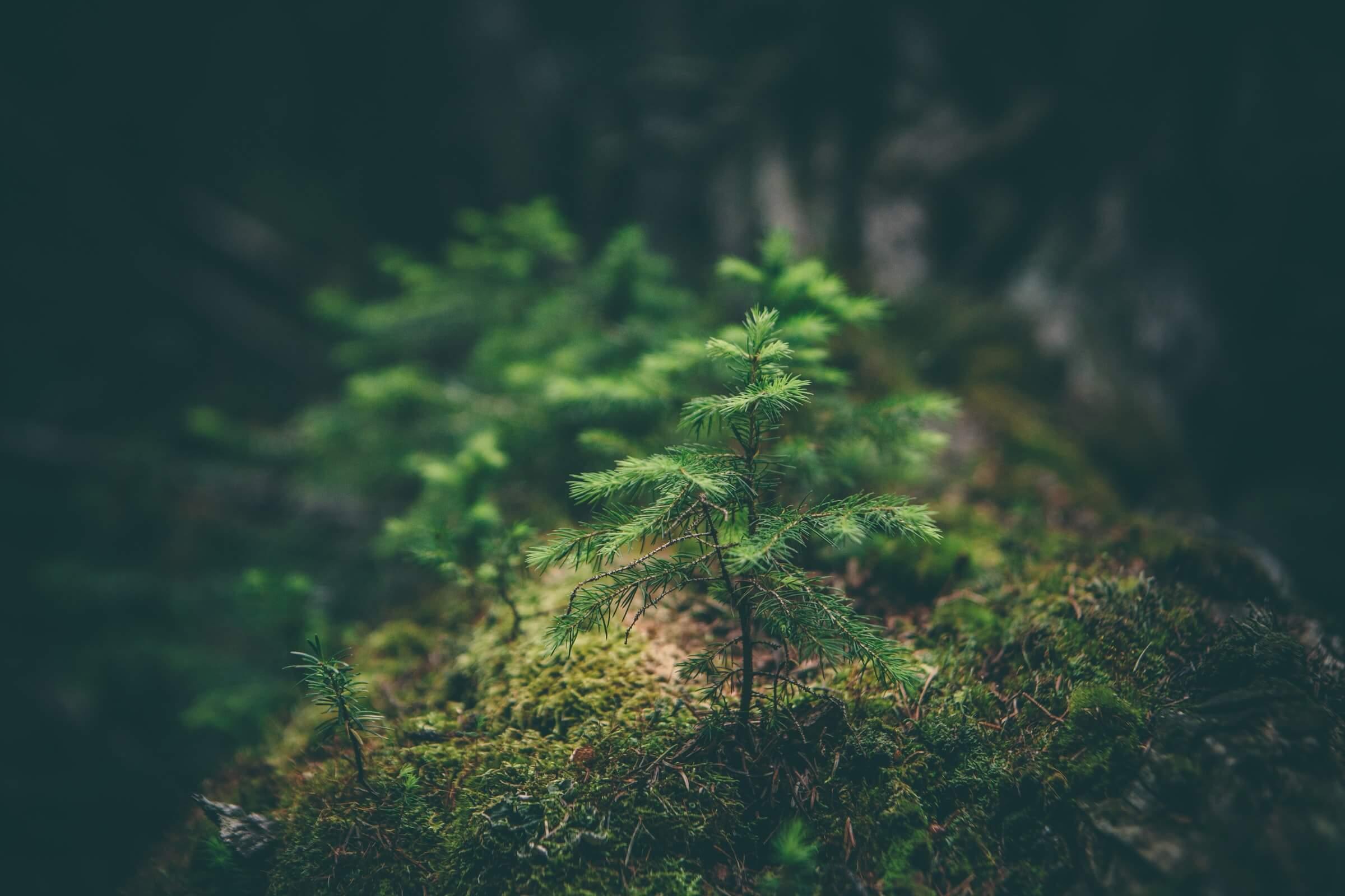【学ぶ】自然と自分のつながりを学ぶ・ナチュラルケア ワークショップ開催です。